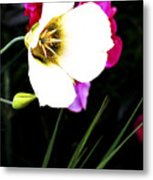 Colorado Wildflower1 Metal Print