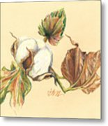 Colored Pencil Cotton Plant Metal Print