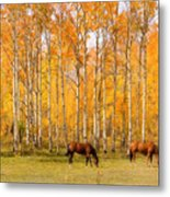 Colorful Autumn High Country Landscape Metal Print