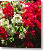 Colorful Bougainvilleas Metal Print