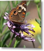 Colorful Butterfly On Daisy Metal Print