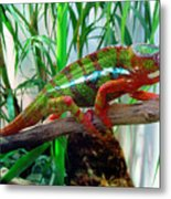 Colorful Chameleon Metal Print