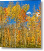Colorful Colorado Autumn Landscape Metal Print