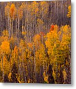 Colorful Colorado Autumn Landscape Vertical Image Metal Print