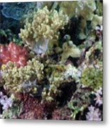 Colorful Coral Reef Metal Print