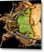 Colorful Cryptic Moth Metal Print
