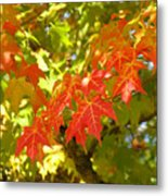 Colorful Fall Leaves Red Nature Landscape Baslee Troutman Metal Print