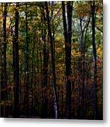 Colorful Fall Season Metal Print