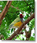 Colorful Finch Metal Print