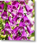 Colorful Foxglove Flowers Metal Print