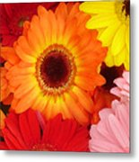 Colorful Gerber Daisies Metal Print