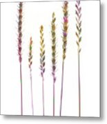 Colorful Grasses  Metal Print