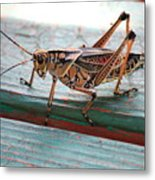 Colorful Grasshopper Metal Print