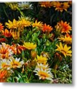 Colorful In The Garden  Metal Print