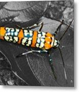 Colorful Insect - Ornate Bella Moth Metal Print
