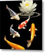 Colorful Koi With Water Lily Metal Print