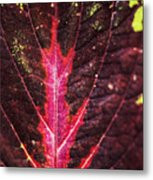Colorful Leaf By Mother Nature Metal Print