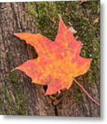 Colorful Leaf Metal Print