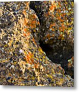 Colorful Lichens Metal Print