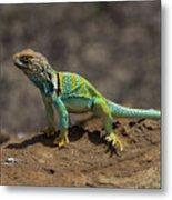 Colorful Lizard Metal Print