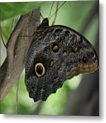 Colorful Markings On A Blue Morpho Butterfly On A Tree Trunk Metal Print