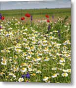 Colorful Meadow With Wild Flowers Metal Print