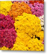 Colorful Mum Flowers Fine Art Abstract Photo Metal Print