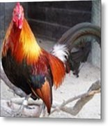 Colorful Rooster Metal Print