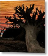 Colorful Roots Metal Print