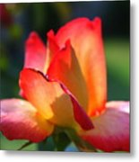 Colorful Rose Metal Print