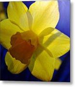 Colorful Spring Floral Metal Print