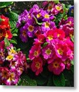 Colorful Spring Primrose By Kaye Menner Metal Print