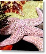Colorful Starfish Metal Print