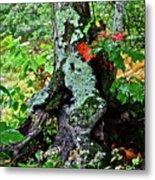 Colorful Stump Metal Print
