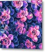 Colorful Succulent Plants Metal Print