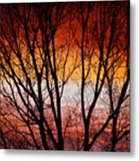 Colorful Tree Branches Metal Print
