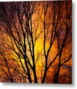 Colorful Tree Silhouettes Metal Print