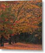 Colorful Trees Metal Print