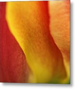 Colorful Tulip Closeup Abstract Metal Print