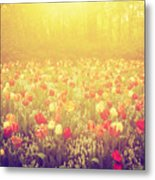 Colorful Tulip Flowers In The Garden On Sunny Day In Spring Metal Print