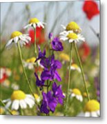 Colorful Wild Flowers Nature Scene Metal Print