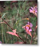 Colorization Of Autumn Metal Print