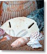 Colors From Sanibel Island Metal Print