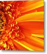 Colors Galore Metal Print