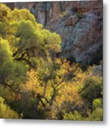 Colors Of Autumn In The Sonoran  Metal Print
