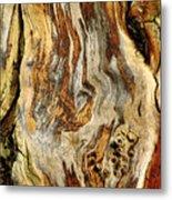 Colors Of Bark Metal Print