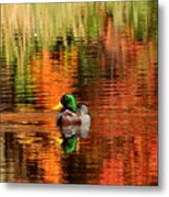 Colors Of The Morning Metal Print