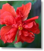 Colors Of The Tropics Hibiscus Metal Print