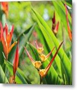 Colors Of The Tropics Metal Print