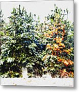 Coloured Trees  Metal Print